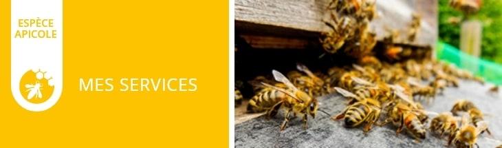 espèce apicole : mes services