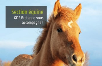 L'action de GDS Bretagne sur la rhinopneunomie équine