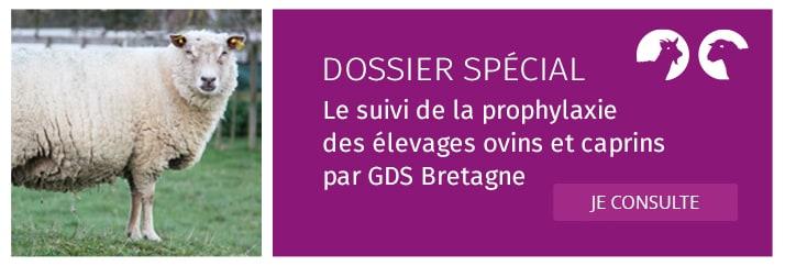Le suivi de la prophylaxie des élevages ovins et caprins par GDS Bretagne