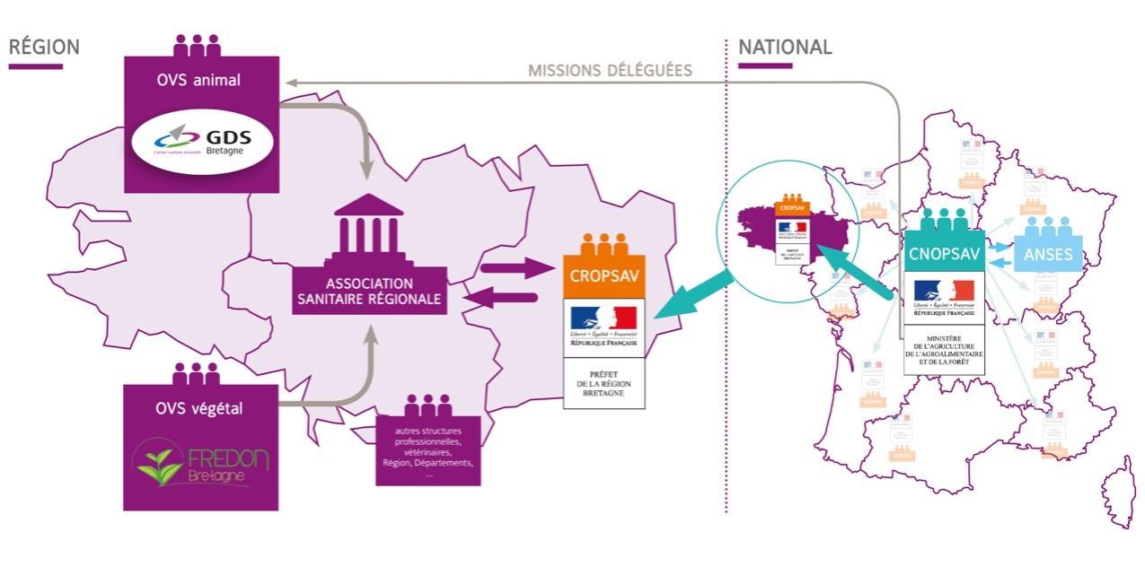 La gouvernance sanitaire du GDS Bretagne