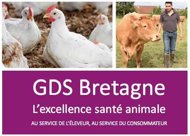 GDS Bretagne | L'excellence santé animale
