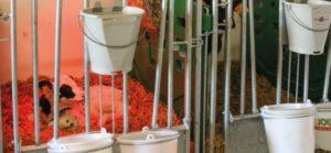 le logement des veaux laitiers