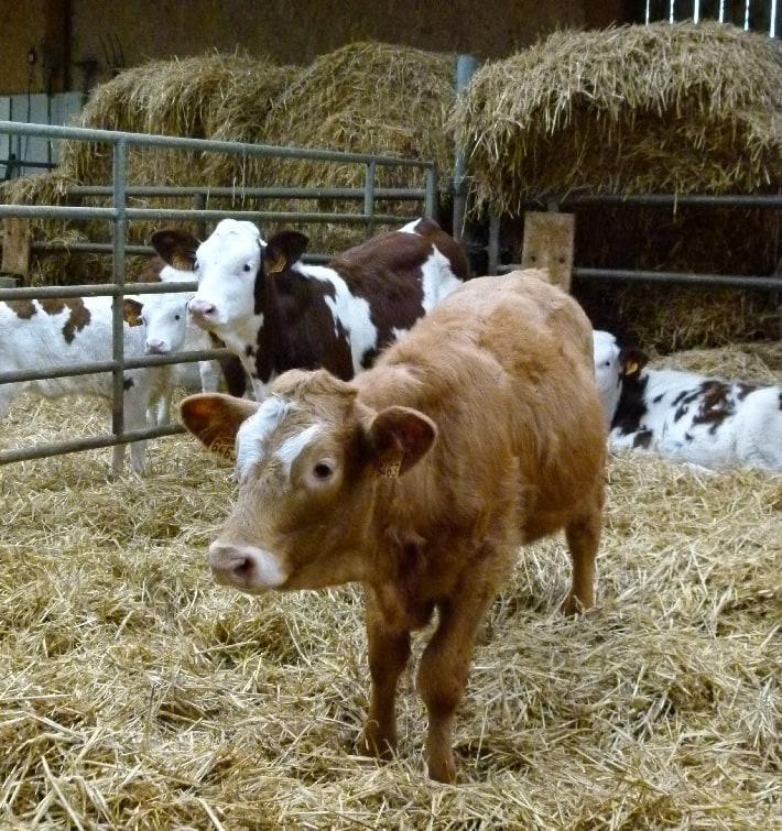 Fin de la grève des commerçants bestiaux