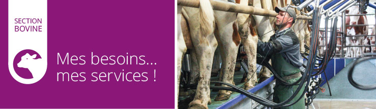 section bovine : mes services