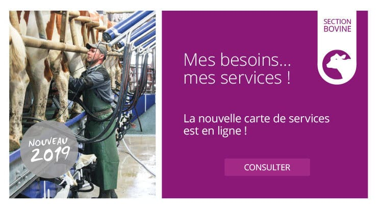 Mes services - section bovine 2019