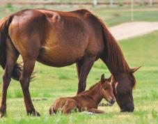 photo Surveiller et protéger les élevages